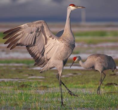 Wildlife-Habitats